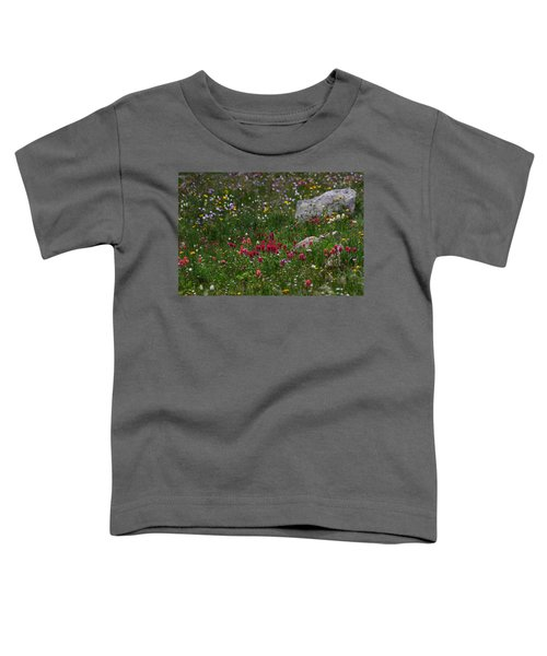 Indian Paintbrush II Toddler T-Shirt
