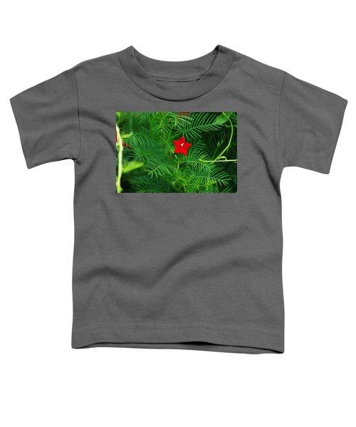 Ipomoea Quamoclit Toddler T-Shirt