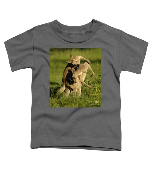 Kangaroos Taking A Bow Toddler T-Shirt by Bob Christopher