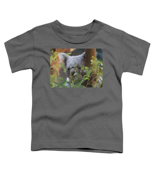 Koala Bear  Toddler T-Shirt by Dan Sproul