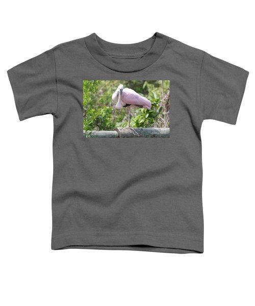 Light Pink Roseate Spoonbill Toddler T-Shirt by Carol Groenen