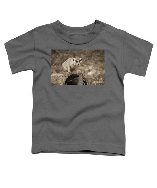 Meerkat On A Log Toddler T-Shirt by Douglas Barnard