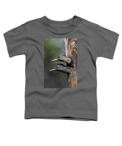 Northern Flicker Chicks In Nest Cavity Toddler T-Shirt