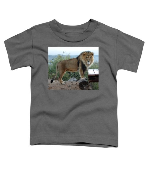 Out Of Africa  Lion 1 Toddler T-Shirt