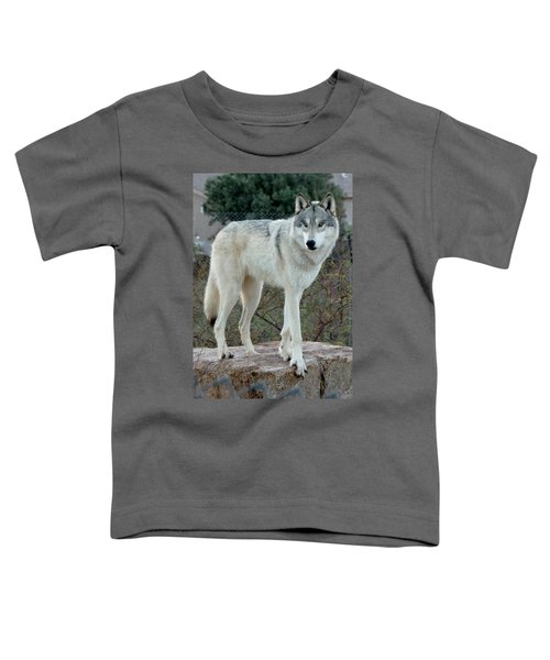 Out Of Africa Wolf  Toddler T-Shirt