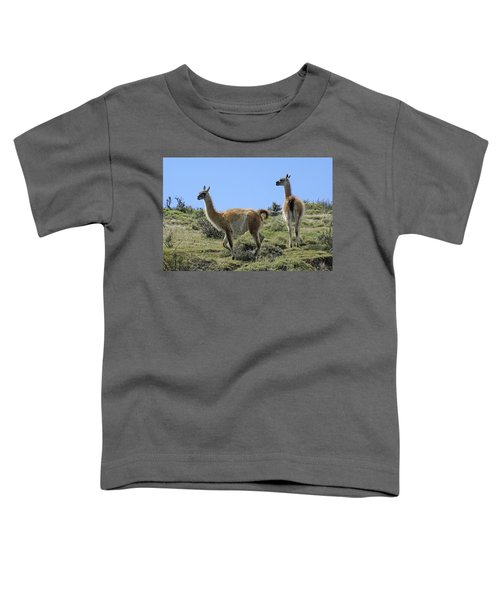 Patagonian Guanacos Toddler T-Shirt by Michele Burgess