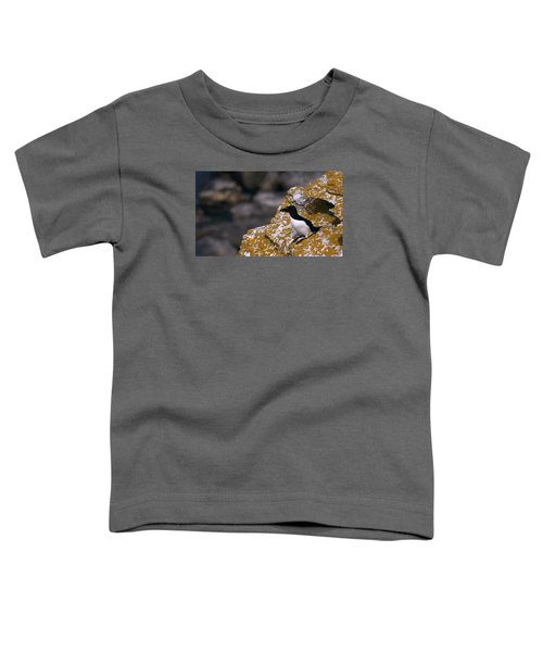 Razorbill Bird Toddler T-Shirt by Dreamland Media