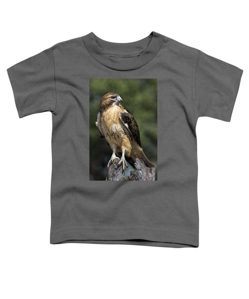 Red Tailed Hawk Toddler T-Shirt