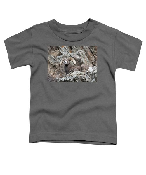 Rocky Mountain Big Horn Ram On Watch II Toddler T-Shirt