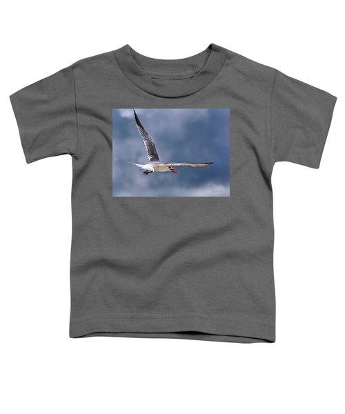 Royal Tern 1 Toddler T-Shirt