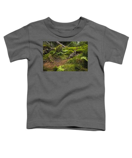 Scottish Wildcat And Domestic Cat Toddler T-Shirt