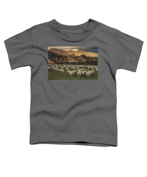 Sheep Flock At Dawn Arrowtown Otago New Toddler T-Shirt
