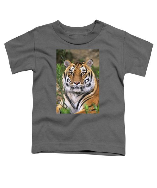 Siberian Tiger Staring Endangered Species Wildlife Rescue Toddler T-Shirt