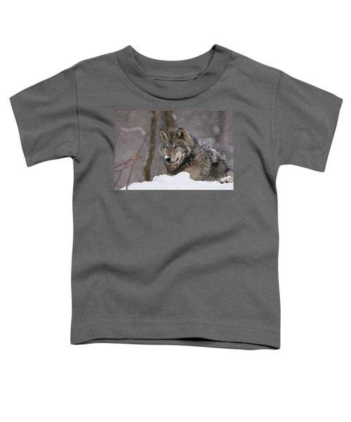 Snow Nose Toddler T-Shirt