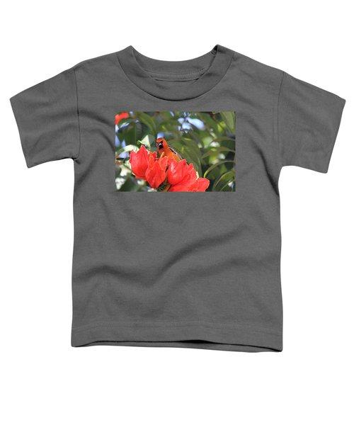 Streak-backed Oriole Toddler T-Shirt