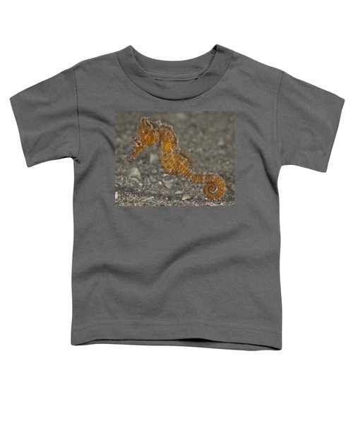 The Baby Seahorse Toddler T-Shirt