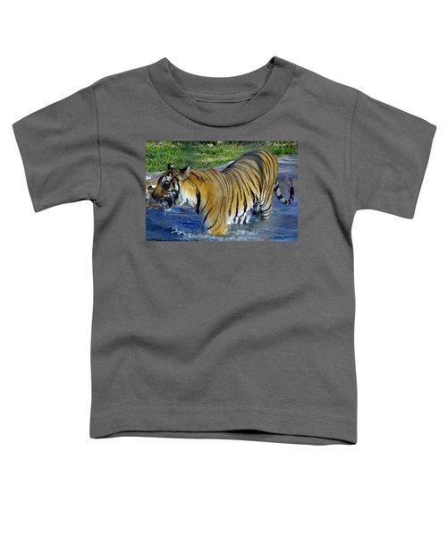 Tiger 4 Toddler T-Shirt