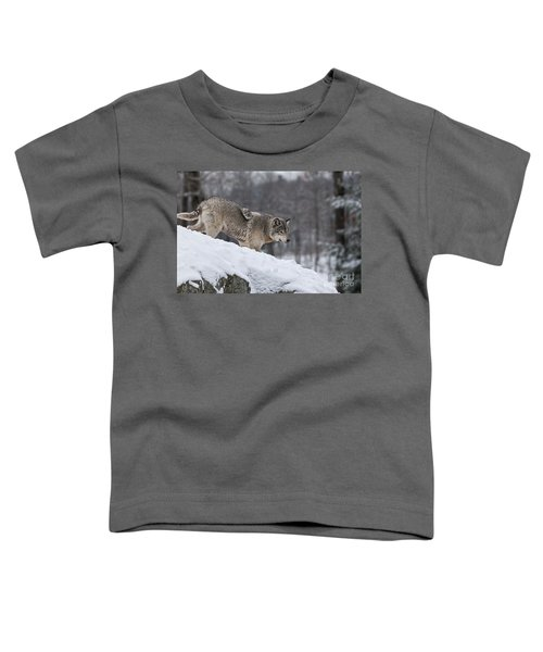 Timber Wolf On Hill Toddler T-Shirt