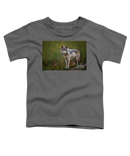 Timber Wolf Pictures 401 Toddler T-Shirt