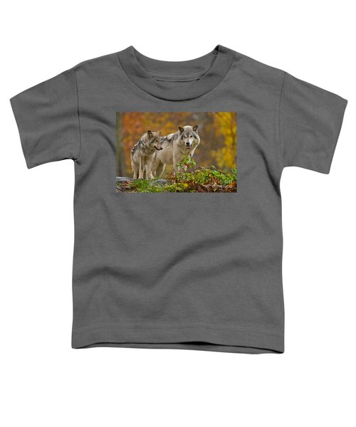 Timber Wolf Pictures 411 Toddler T-Shirt