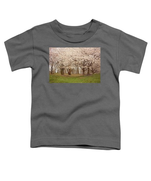 Washington Dc Cherry Blossoms Toddler T-Shirt