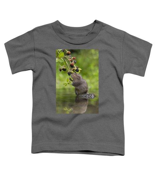 Water Vole Eating Blackberries Kent Uk Toddler T-Shirt