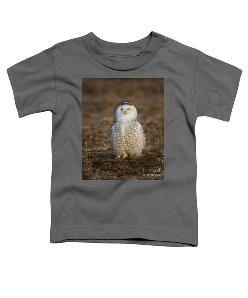 Young Snowy Owl Toddler T-Shirt