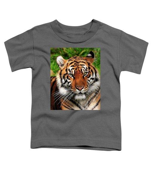 Sumatran Tiger Portrait Toddler T-Shirt