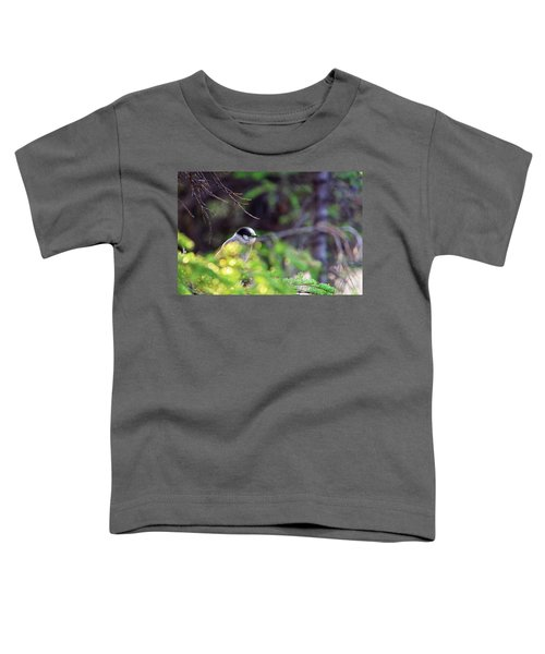 Black Capped Chicadee Toddler T-Shirt