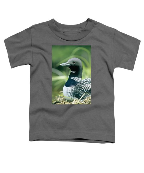 Common Loon, La Mauricie National Park Toddler T-Shirt by Philippe Henry