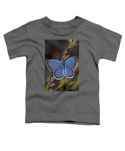 Eastern Tailed Blue Butterfly Toddler T-Shirt