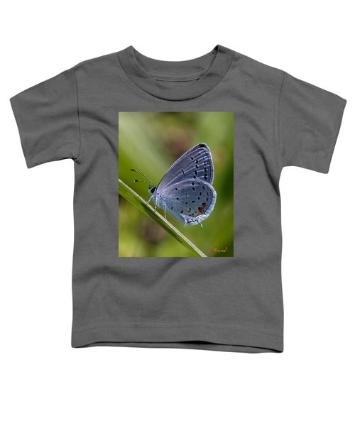 Eastern Tailed-blue Butterfly Din045 Toddler T-Shirt