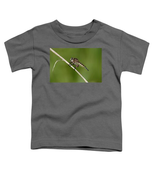 Giant Robber Fly - Promachus Hinei Toddler T-Shirt