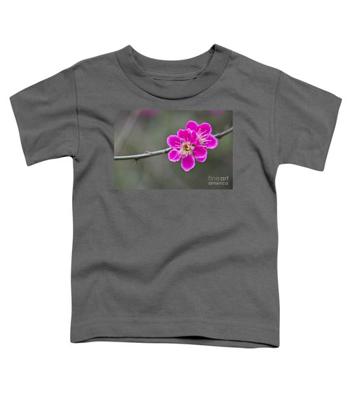 Japanese Flowering Apricot. Toddler T-Shirt by Clare Bambers