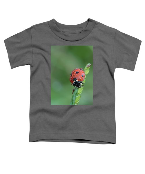 Seven-spotted Lady Beetle On Grass With Dew Toddler T-Shirt