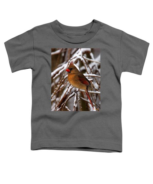 Snowbirds--cardinal Dsb025 Toddler T-Shirt
