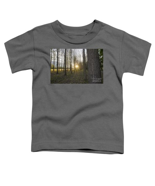 Sunlight In The Forest Toddler T-Shirt