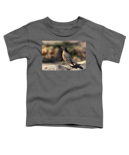 American Robin On Rock Toddler T-Shirt