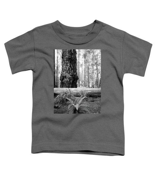 Coastal Redwoods  Toddler T-Shirt