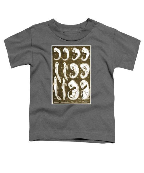 Ernst Haeckels Evolution Of Man, 1874 Toddler T-Shirt