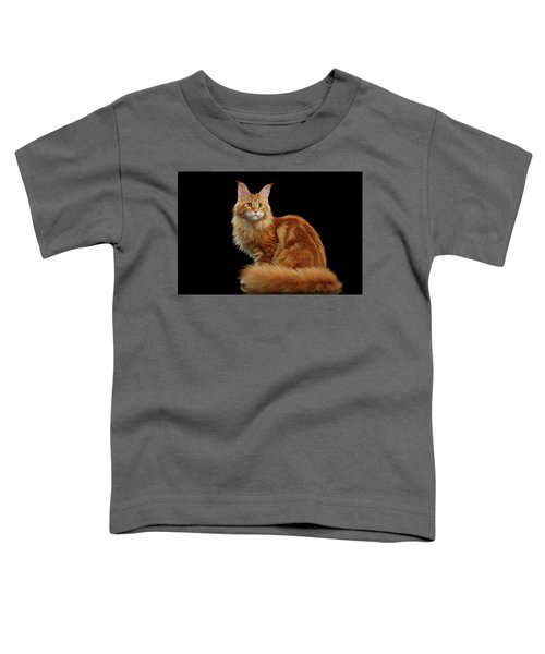 Ginger Maine Coon Cat Isolated On Black Background Toddler T-Shirt