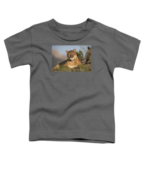 Mountain Lion Portrait North America Toddler T-Shirt