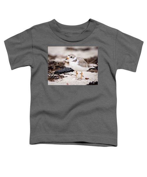 Piping Plover Toddler T-Shirt