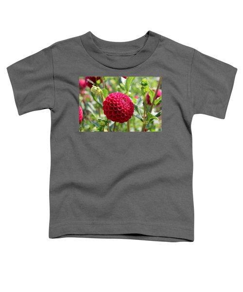 Red  Dahlia Toddler T-Shirt