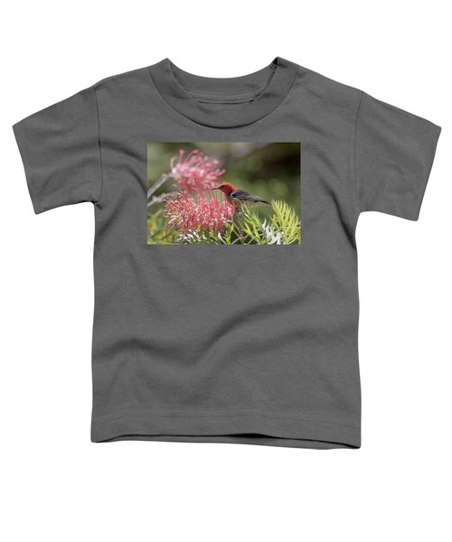 Scarlet Honeyeater Toddler T-Shirt