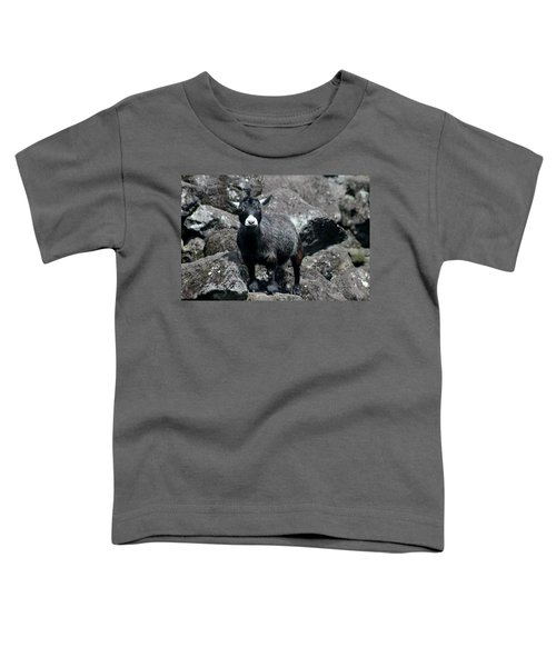 This Is My Rock Toddler T-Shirt