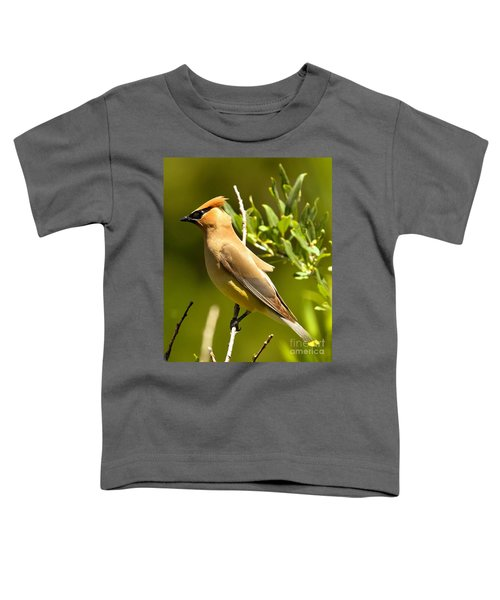 Cedar Waxwing Closeup Toddler T-Shirt