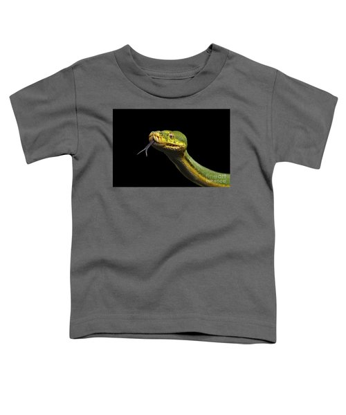 Green Tree Python. Morelia Viridis. Isolated Black Background Toddler T-Shirt