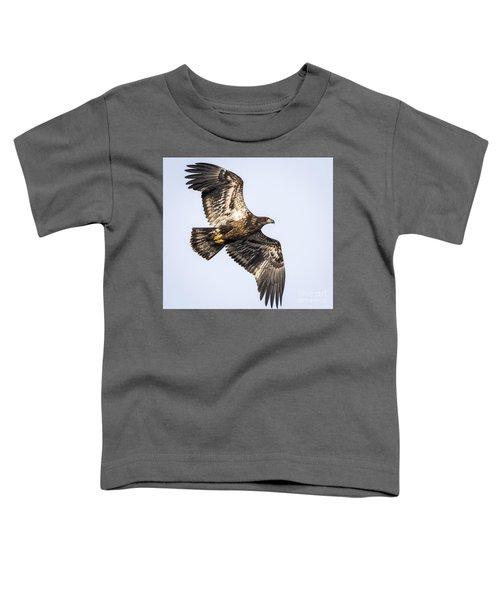 Juvenile Bald Eagle  Toddler T-Shirt