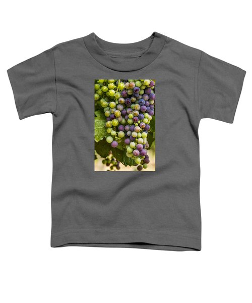Red Wine Grapes Hanging On The Vine Toddler T-Shirt